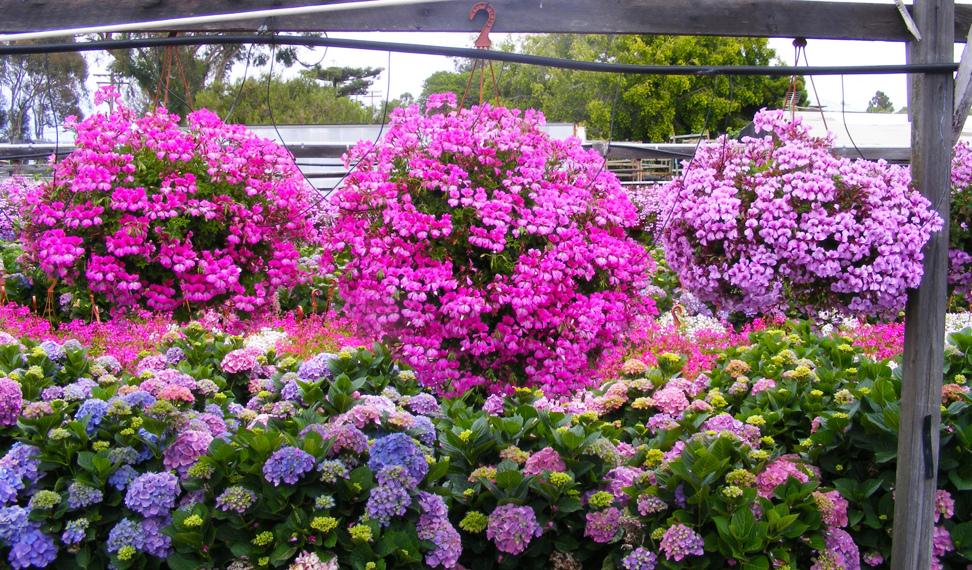FlorAbunda Spring Crop